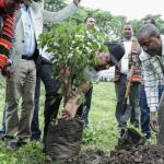 Environment protection: Ethiopia plants 350m trees